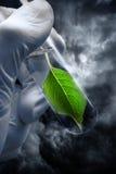 Hand holding test tube with plant on thunder sky Stock Photos