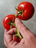 Hand holding tomatoes Royalty Free Stock Images
