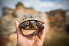 Hand holding a tortoise stock image
