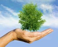 Hand Holding Tree Royalty Free Stock Photo