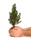 Hand holding tree. Stock Photos