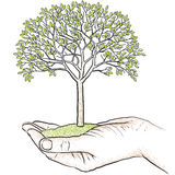 Hand holding a tree Royalty Free Stock Images