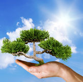 Hand holding tree. Against blue sky Royalty Free Stock Photo