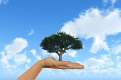 Hand holding tree against a blue sky Stock Image