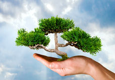 Hand holding tree against sky Stock Photography