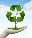 Tree as a recycle symbol Royalty Free Stock Photography