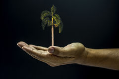 Hand holding a tree Royalty Free Stock Photo