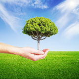 Hand holding tree Stock Image