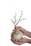 Hand holding tree on globe. Hand holding  a tree seedling on globe in hand on white background Royalty Free Stock Image