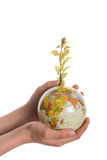 Hand holding tree on globe. Hand holding  a tree seedling on globe in hand on white background Stock Photos