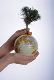 Hand holding tree on globe Stock Photography