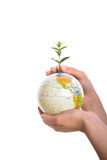 Hand holding tree on globe Royalty Free Stock Images