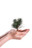 hand holding tree on globe Stock Images