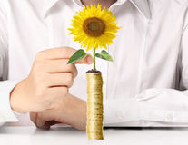 Hand holding tree growing on golden coins Royalty Free Stock Images