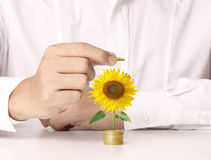 Hand holding tree growing on golden coins Royalty Free Stock Photography