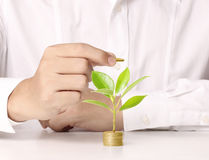Hand holding tree growing on golden coins. Saving money Royalty Free Stock Photo