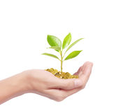 Hand holding tree growing on golden coins Royalty Free Stock Image