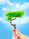 Hand holding tree growing on light bulb with light blue sky with Stock Photos