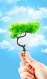 Hand holding tree growing on light bulb with light blue sky with Stock Photo
