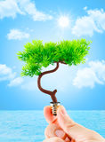 Hand holding tree growing on light bulb with sun burst and light Royalty Free Stock Image