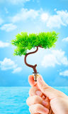 Hand holding tree growing on light bulb with sun burst and light Royalty Free Stock Photo