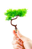 Hand holding tree growing on light bulb on white background Stock Images