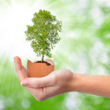 Hand holding tree growing out of the egg Stock Photos