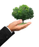 Hand holding a tree isolate on white Stock Images