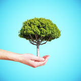 Hand holding tree Royalty Free Stock Photo