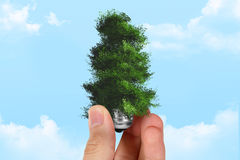 Hand Holding Tree on Light Bulb Stock Photos
