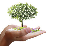 Hand holding tree ,light bulb Stock Photo