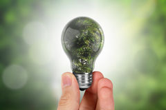 Hand Holding Tree in Light Bulb Royalty Free Stock Photo