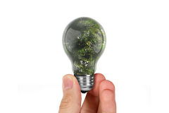 Hand Holding Tree in Light Bulb Royalty Free Stock Image