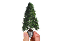 Hand Holding Tree in Light Bulb Stock Images