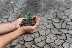 Hand holding tree. Hand holding and protect little green plant in soil over dry and crack soil because no water long time at here Stock Photos