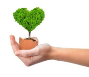 Hand holding tree in the shape of heart Stock Images