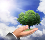 Hand holding a tree on sky Royalty Free Stock Photography