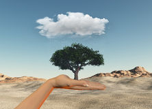 Hand holding tree under a rain cloud against a desert Stock Image