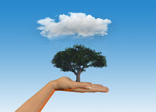 Hand holding tree under a rain cloud Stock Images