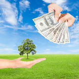 Hand holding tree and US Dollars banknote Stock Image