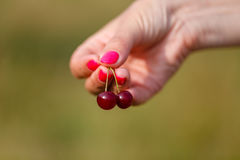Hand holding the two fresh cherries Royalty Free Stock Photos