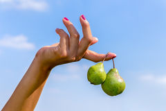 Hand holding two hanging green pears in blue sky Stock Images