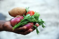 Hand holding vegetables Royalty Free Stock Images