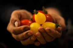 Hand holding vegetables and fruits. Hand holding red and yellow fruits and vegetables Stock Photo