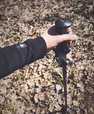 A hand holding a walking stick royalty free stock images