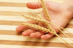 Hand holding wheat ears Stock Photos