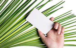 Hand holding white card. Royalty Free Stock Photography