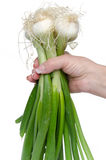 Hand holding white onions with green stalks Royalty Free Stock Photos