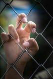 Hand holding wine net. Stock Photo