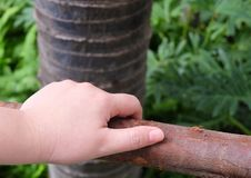 Hand Holding Wooden Fence in A Garden Stock Photography